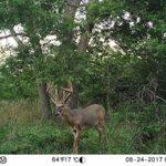 Bushnell 119874C 20MP Trophy Cam HD Low Glow Trail Camera Brown