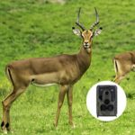Cabilock Trail Camera Waterproof 1200 Million 1080P Game Hunting Scouting Cam for Wildlife Monitoring